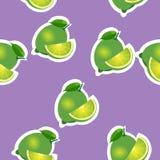 modell limefrukt och leavesand skivar samma format på purpurfärgad bakgrund Royaltyfria Bilder