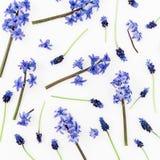 Modell med blåa eller rosa blommor och kronblad på vit bakgrund Lekmanna- l?genhet, b?sta sikt fotografering för bildbyråer