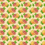 Modell med grapefrukter Arkivfoton