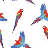 Modell med papegojor seamless textur vektor illustrationer