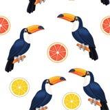 Modell med tukan och citruns seamless texturvektor Vektor Illustrationer