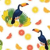 Modell med tukan och frukter seamless texturvektor royaltyfri illustrationer