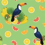 Modell med tukan och frukter seamless texturvektor Vektor Illustrationer
