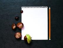 Modell mit Kastanien und einem Blatt Papier Stockfoto