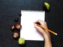 Modell mit Kastanien und einem Blatt Papier stockbilder