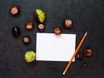 Modell mit Kastanien und einem Blatt Papier Stockbild