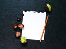 Modell mit Kastanien und einem Blatt Papier Lizenzfreie Stockbilder