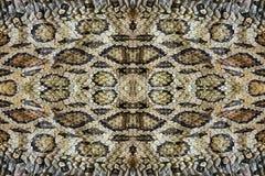 Modell och textur av ormen Arkivfoton