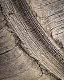 Modell på gammalt trä Fotografering för Bildbyråer