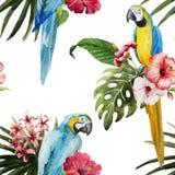 Modell som är tropisk, vattenfärg Fotografering för Bildbyråer