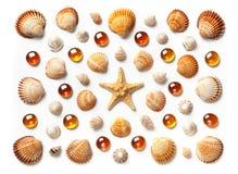 Modell som göras av den isolerade skal, sjöstjärnan och orange glass pärlor på vit bakgrund Royaltyfria Foton