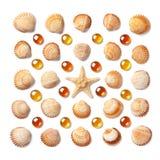 Modell som göras av den isolerade skal, sjöstjärnan och orange glass pärlor på vit bakgrund Arkivbilder