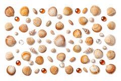 Modell som göras av isolerade skal och orange glass pärlor på vit arkivbilder