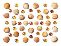 Modell som göras av isolerade skal och orange glass pärlor på vit bakgrund Royaltyfria Bilder