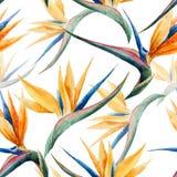Modell vattenfärg, blomma Arkivfoton