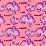 modellbakgrund med orkidéblommor royaltyfria bilder
