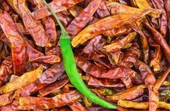 Modellen av den varma chili torkade och ny peppar för gräsplan som kontrasterar grönsakgrunden Royaltyfria Bilder