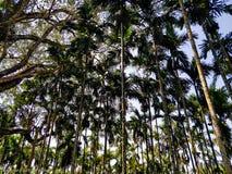 Modellen av kokospalmer under filten av moln! royaltyfri foto