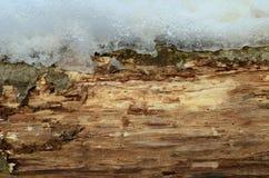 Modellen av trädskället Bakgrund Härligt texturera Arkivbild