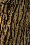 Modellen av trädskället Bakgrund Härligt texturera Fotografering för Bildbyråer
