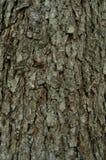 Modellen av trädskället Bakgrund Härligt texturera Royaltyfria Foton