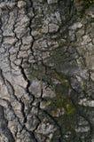 Modellen av trädskället Bakgrund Härligt texturera Arkivfoto
