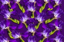 Modellen med den purpurfärgade irins blommar på en purpurfärgad bakgrund Royaltyfri Foto