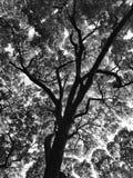 Modeller av en trädfilial i svartvitt royaltyfri bild