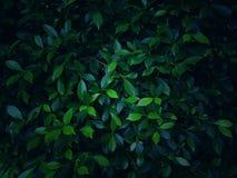 Modeller av lövverk eller gröna växter med slut-UPS royaltyfria foton