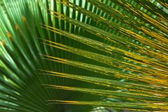 modeller av palmblad Arkivbilder