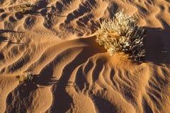 Modeller för torrt gräs och vindi sanden royaltyfri fotografi