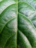 Modeller och texturer av grön lövverk arkivbild