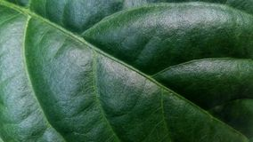 Modeller och texturer av grön lövverk arkivfoto
