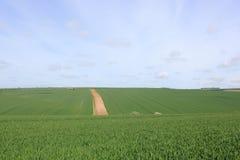 Modeller och texturer av gröna vetefält i ett vårlandskap royaltyfri foto