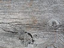 Modeller och texturer av trä arkivfoto