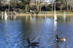Modellera segelbåtar i ett damm i parkerar i Paris Fåglar flyger, föräldrar går med barn, gäss i ett damm arkivfoto