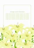 Modellgräsplan för ett kort med liljan också vektor för coreldrawillustration Arkivfoto