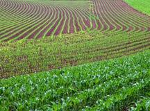 Modelli agricoli del campo di inizio dell'estate Immagine Stock Libera da Diritti