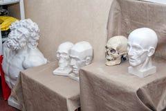 Modelli del gesso della testa umana nella classe di arte Ecorche immagine stock libera da diritti