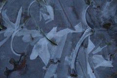 Modelli del ghiaccio Fotografie Stock Libere da Diritti