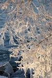 Modelli del ghiaccio dello spruzzo sull'albero Immagini Stock Libere da Diritti
