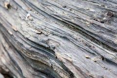 Modelli del legname galleggiante Immagine Stock Libera da Diritti