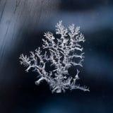 Modelli della neve Immagini Stock