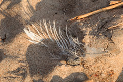Modelli della spiaggia immagini stock libere da diritti