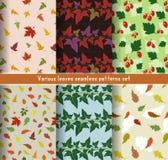 Modelli delle foglie determinati Fotografie Stock Libere da Diritti