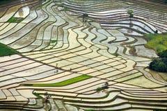 Modelli delle risaie Fotografia Stock