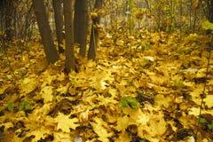 Modelli di autunno Fotografia Stock Libera da Diritti