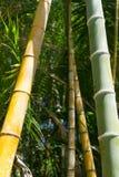 Modelli di bambù del boschetto Fotografia Stock