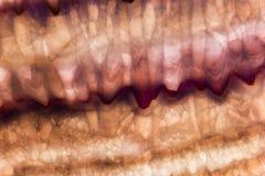 Modelli e fondo di marmo rosa Fotografia Stock Libera da Diritti