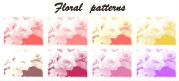Modelli floreali Fotografia Stock